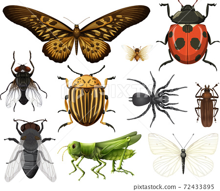 Different insects collection isolated on white background 72433895
