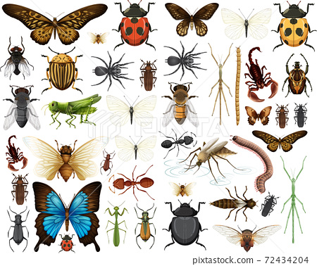 Different insects collection isolated on white background 72434204