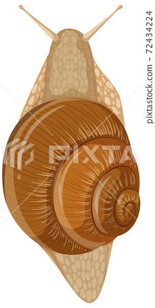 Isolated snail on white background 72434224
