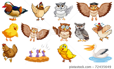 Set of different birds cartoon style isolated on white backgroun 72435649