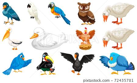 Set of diffrent birds cartoon style isolated on white background 72435781