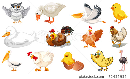 Set of different birds cartoon style isolated on 72435935