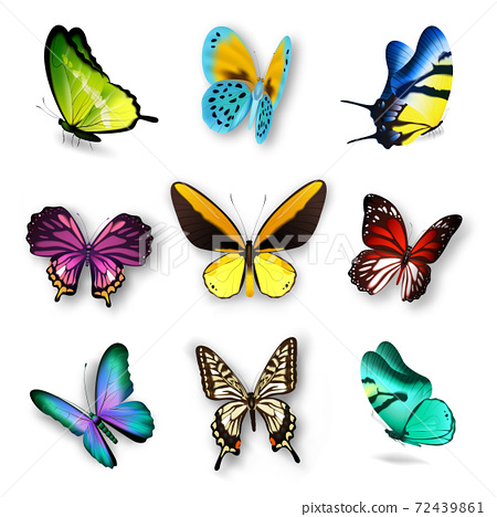 Realistic Butterfly Set 72439861