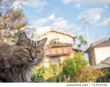 머리가 주렁주렁의 꿩 호랑이의 도둑 고양이 72440598