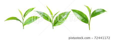 tea leaves on white background 72441172