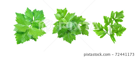 Celery isolated on white background 72441173