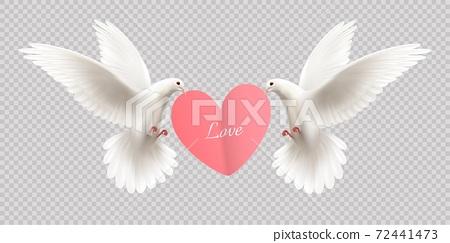 White Pigeons Holding Heart 72441473