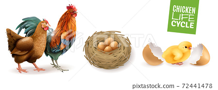 Chicken Life Cycle Set 72441478