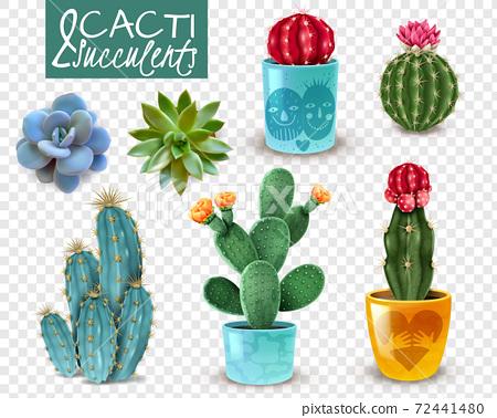Cactus Succulent Realistic Transparent Set 72441480