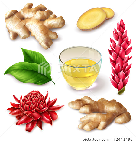 Realistic Ginger Root Spicy Set 72441496