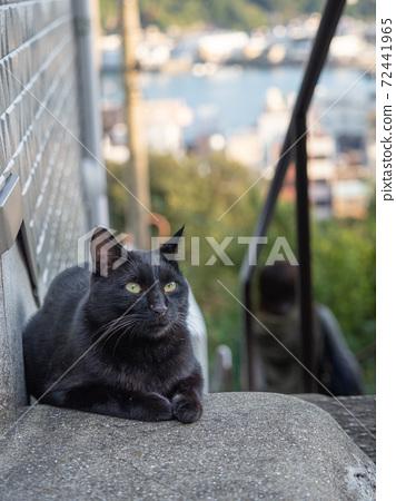 [히로시마 현] 오노 미치의 센 코지 산에 오르는 돌계단에 앉아 검은 고양이 고양이 72441965