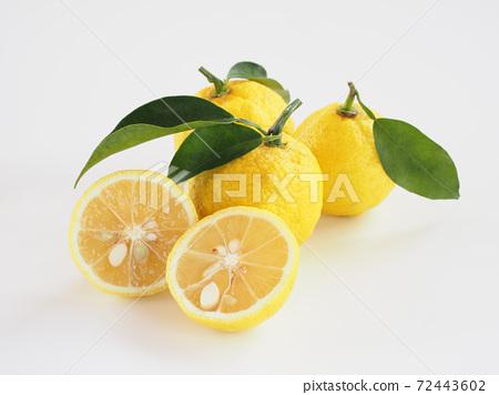 柚子白色背景 72443602