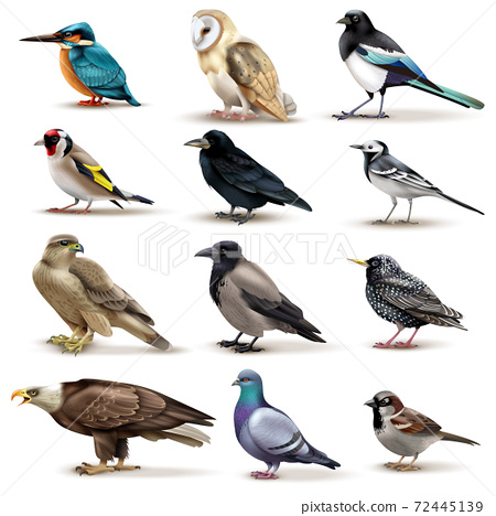 Birds Realistic Fauna Collection 72445139