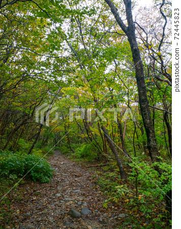 숲의 흙길 (나스 헤세이의 숲 토치 기현) 72445823