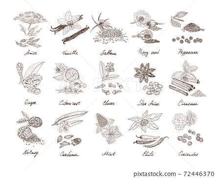 Hand Drawn Natural Spices Set 72446370