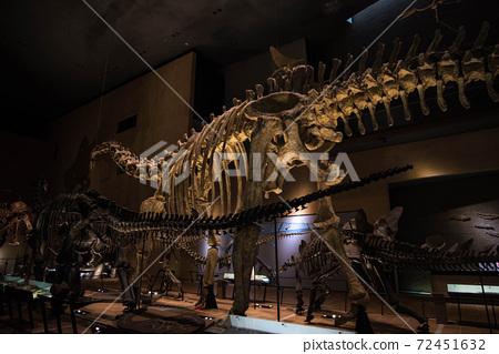 恐龍化石 72451632