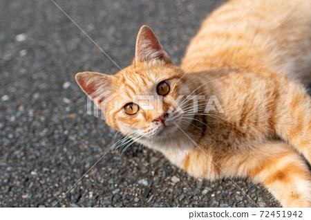 躺在路上的棕貓,大眼睛的可愛貓咪 72451942