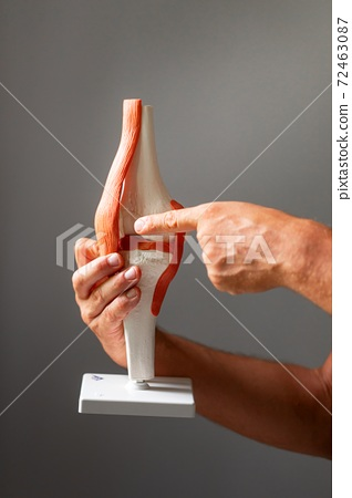 Anatomical model of joint connection closeup 72463087