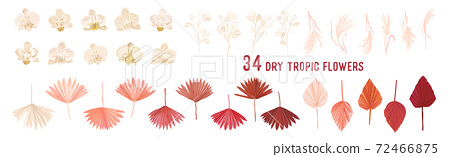 Dried pampas grass, lunaria flowers, orchid, tropical palm leaves vector bouquets. Pastel watercolor floral template 72466875