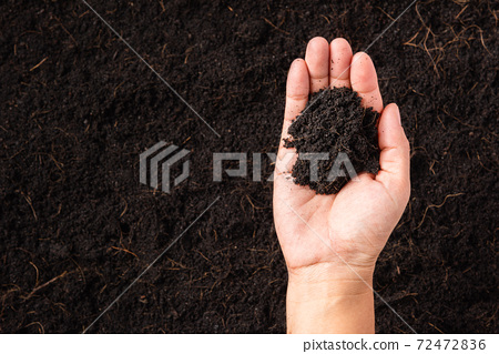 woman hand holding compost fertile black soil background 72472836