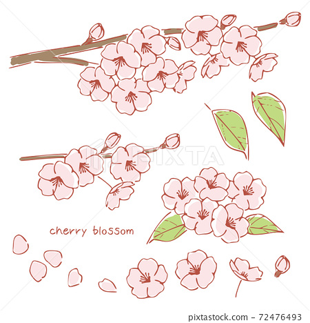 手繪風格的櫻花,櫻桃樹枝 72476493