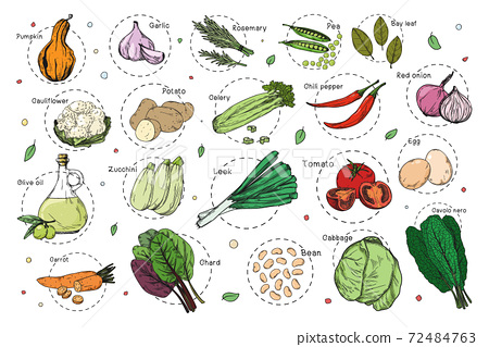 Sketch of different vegetables. Recipe stickers. Set of vegetables isolated on a white background. 72484763