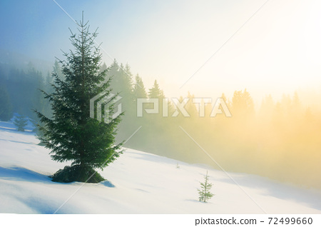 trees in morning mist on a snow covered hill. beautiful winter landscape on a sunny weather 72499660