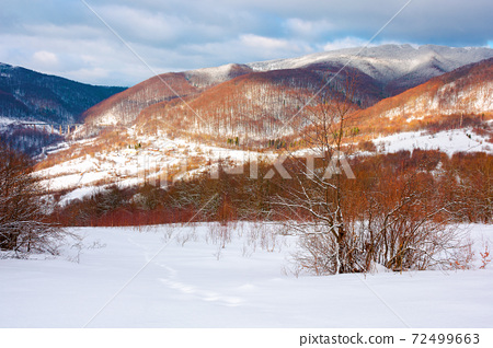winter landscape in afternoon light. beautiful nature scenery in mountains. leafless trees on a snow covered slope. wonderful sunny weather with clouds on the sky 72499663