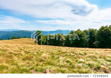yellow grass on the meadow in mountains. beautiful nature landscape beneath a blue sky with fluffy clouds at high noon. 72499664