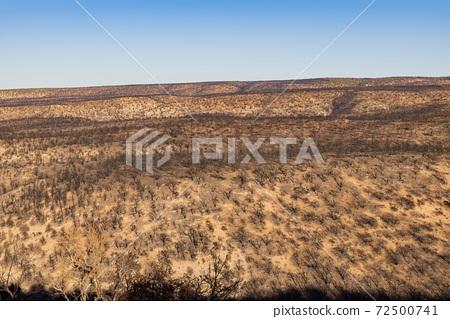 Many black burned tree after a big wild fire 72500741