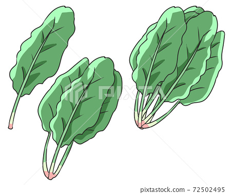 spinach 72502495