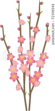Peach blossoms 72506048