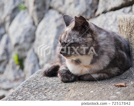 돌계단에 앉아 회색과 백색 녹 무늬의 도둑 고양이 72517842
