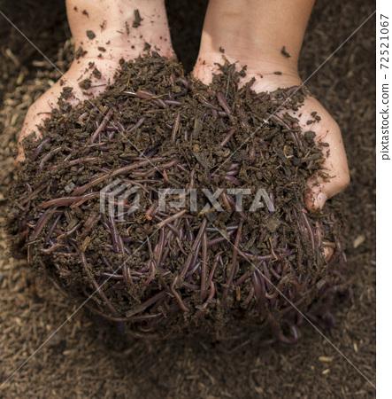 Child hands holding Fertile soil 72521067