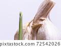 마늘의 발아. 마늘 친자. 슈퍼에서 산 마늘을 심어 보았다 실험. 72542026