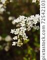 봄꽃 72542103