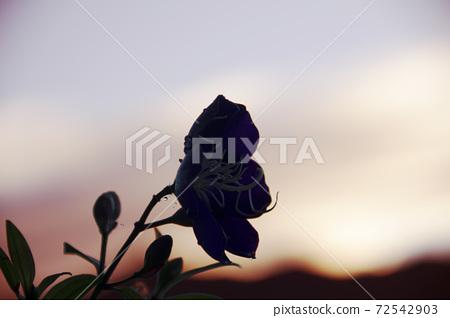 花(剪影) 72542903