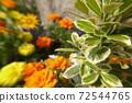 薰衣草花开的春天的花朵 72544765