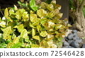 vegetation, vegetative, english garden 72546428