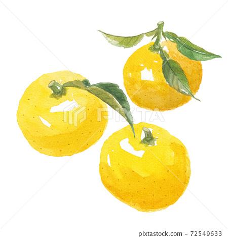 柚子葉3件 72549633