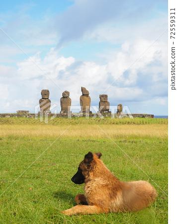 <이스터 섬> 아흐 · 타하이의 모아 이상과 강아지 (2 월) 72559311