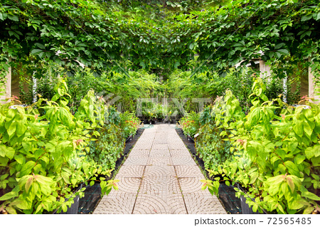 eco friendly plant shop for a green garden in outdoors with a stone square tile walkway of paving slabs among by flowerpots with bushes for landscape park decoration, nobody. 72565485
