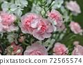 Beautiful bouquet 72565574