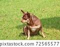 Cute puppy sitting on the lawn 72565577
