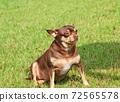 A pretty puppy sitting on a lawn 72565578