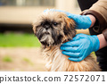 Woman in latex gloves stroking shih tzu dog on city street 72572071