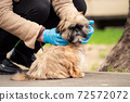 Person in blue latex gloves with shih tzu dog on street 72572072
