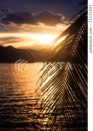 Silhouette of palm leaf against calm ocean and cloudy sky 72572081