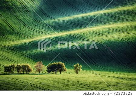 Green grass field background 72573228