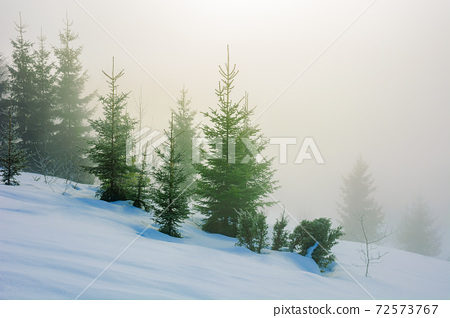 trees in morning mist on a snow covered hill. beautiful winter landscape on a sunny weather 72573767